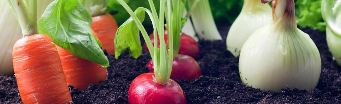 לקראת החורף - ערוגת ירקות בגינה