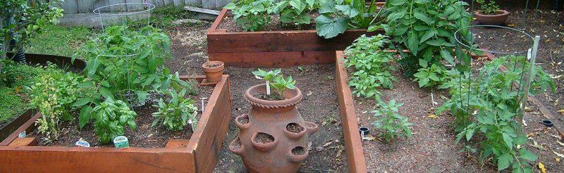 גינת ירקות גם במיכלים