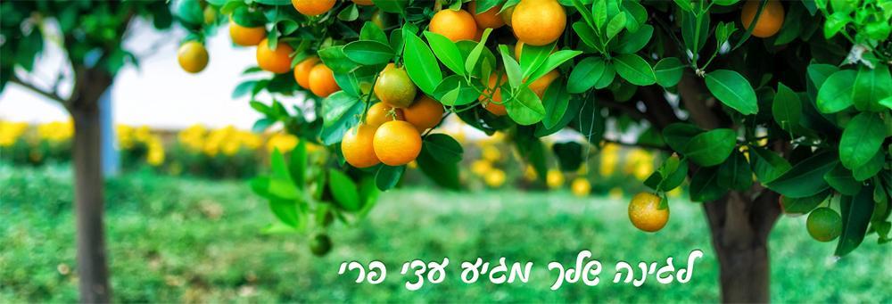 עצי פרי - מתנה שממשיכה לתת ולהעניק