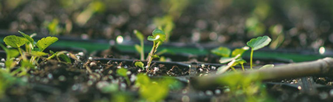 זיבול הגינה בימי החורף וחשיבותו הגדולה