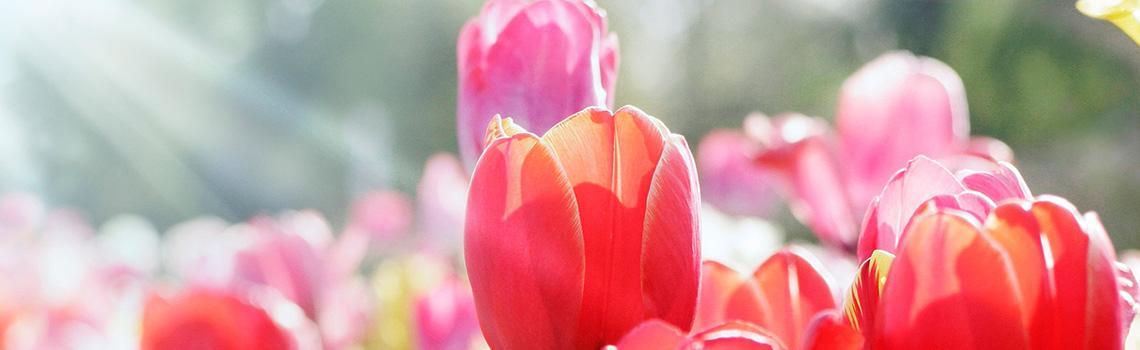 טיפול אביב בגן