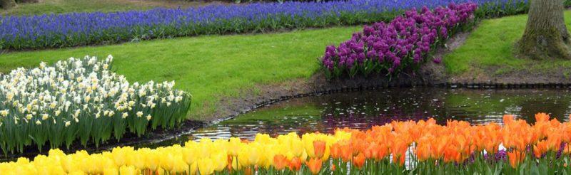 צבעים בגינה